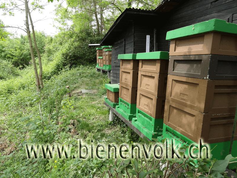 Bienenstand mit Materiallager