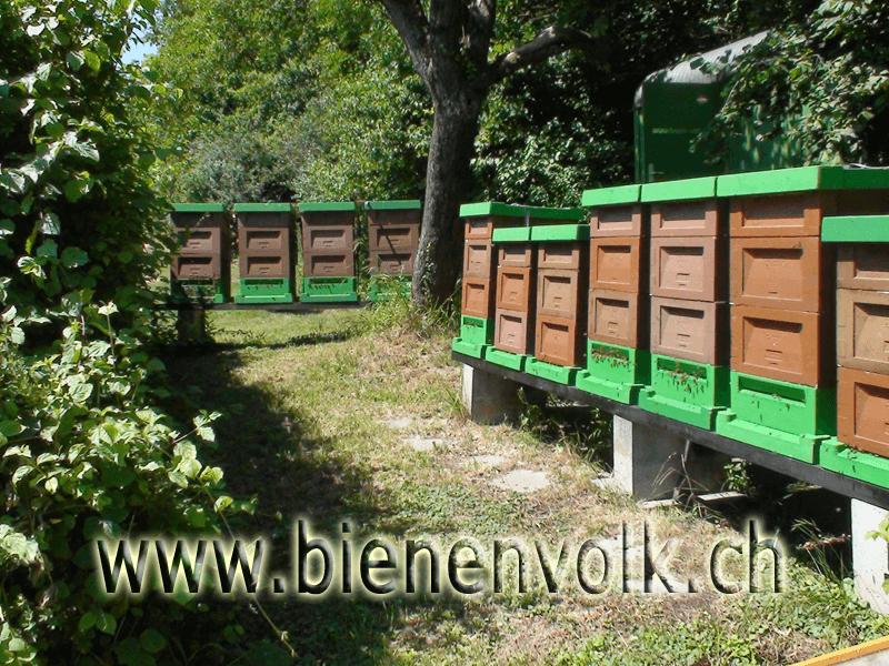 Bienenstand mit Zander Beuten