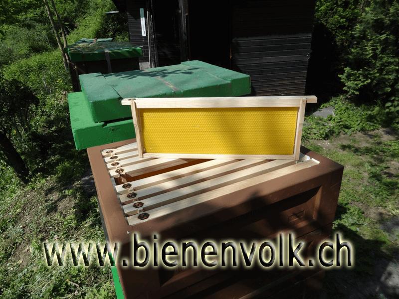 Neues Honigrähmchen mit Mittelwand aus eigenem Wachskreislauf