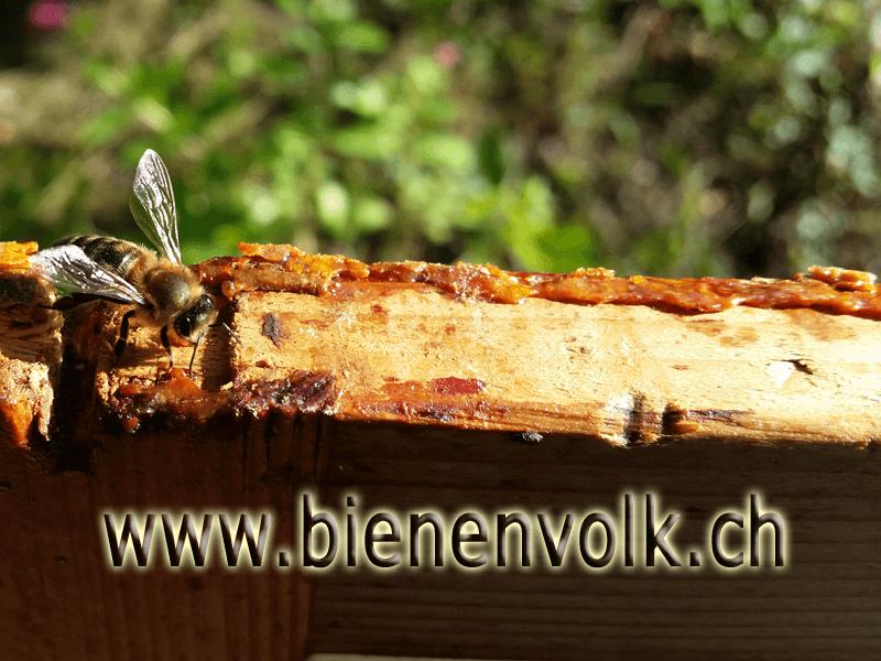 Propolis an einem Schweizer Honigraumfenster