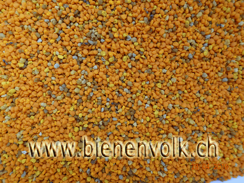 Hauptsächlich Löwenzahn-Pollen, orange