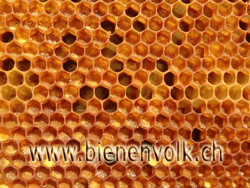 Prega (Pollenbrett)
