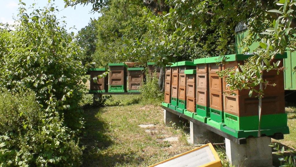 Magazinstand mit Pollenfallen und aufgesetzten Honigräumen