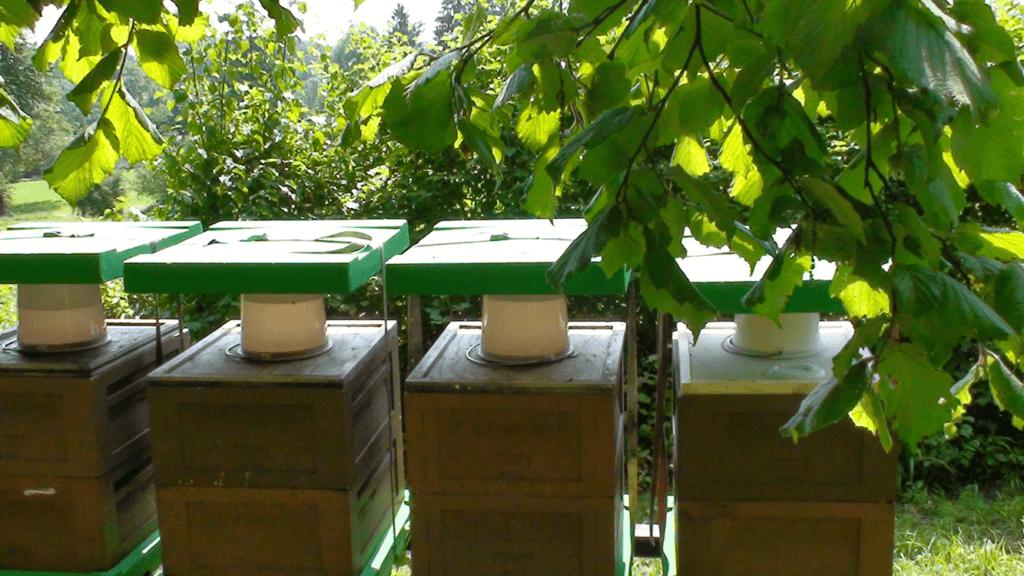 Auffütterung nach der Honigernte