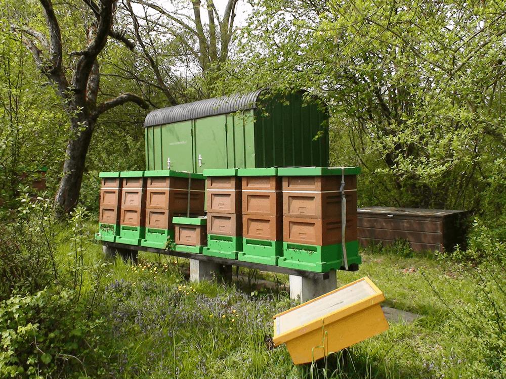 Zander Magazine mit Pollenfalle und aufgesetztem Honigraum