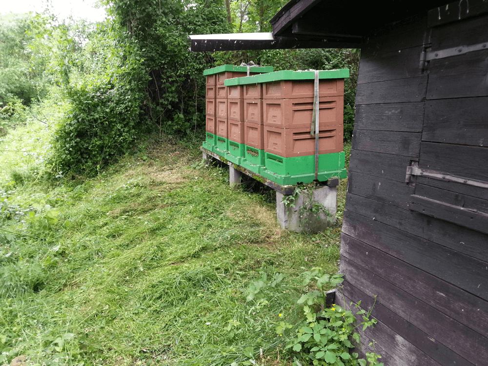 Freistand Nr. 2 im Sommer mit aufgesetzten Honigräumen